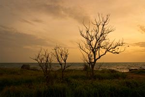 วันสำคัญของไทย วันที่ 21 ตุลาคม วันรักต้นไม้ประจำปีของชาติ