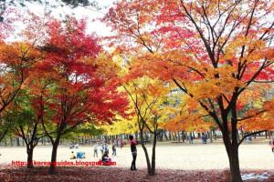 ทัวร์เกาหลี ทัวร์นี้ที่นักท่องเที่ยวใฝ่ฝัน