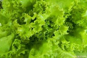 วิธีล้างผักผลไม้ให้สะอาดและการทานเพื่อสุขภาพอย่างเหมาะสม