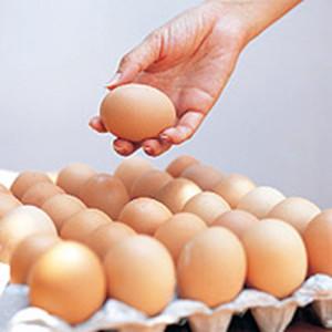 ไข่ไก่เสีย รู้ได้อย่างไร